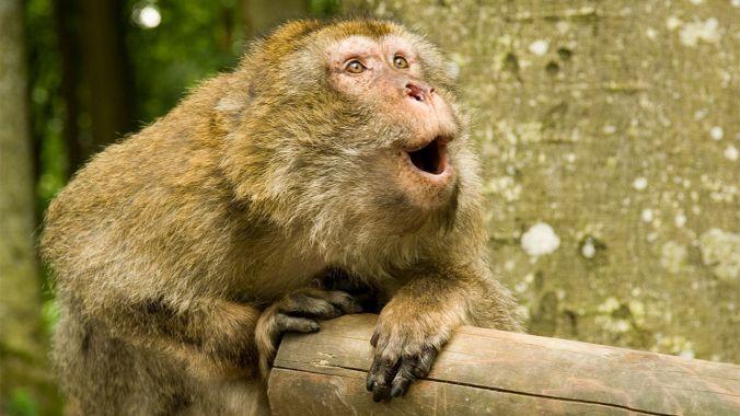 wow monkey